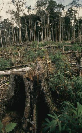 Una Biological Reserve, Bahía, Brazil Deforestation