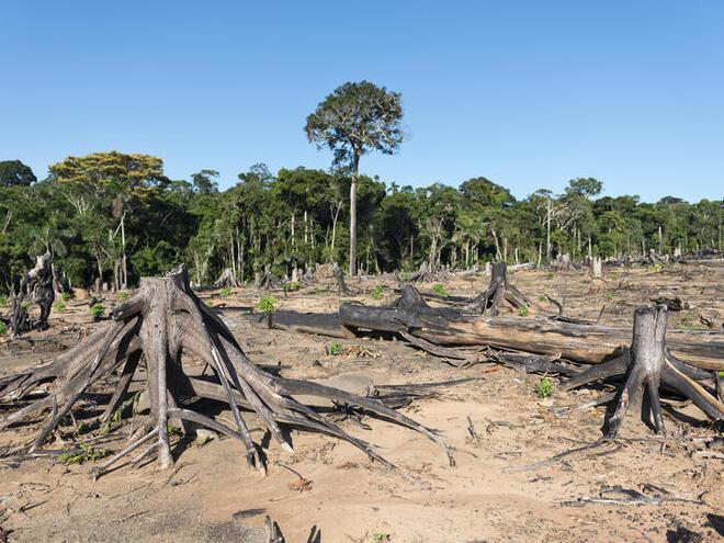 Deforestation in Peru for future agriculture plantation