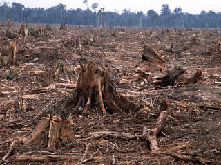 Deforestation in Tesso Nilo, Sumatra