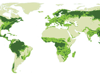 World map of defrorested areas