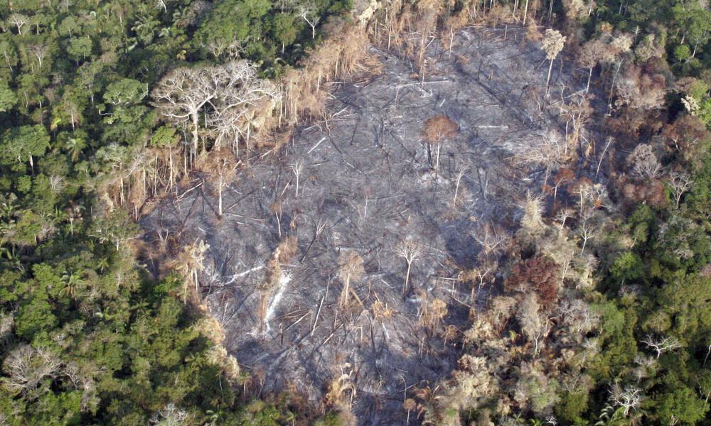 Devastated Amazon forest