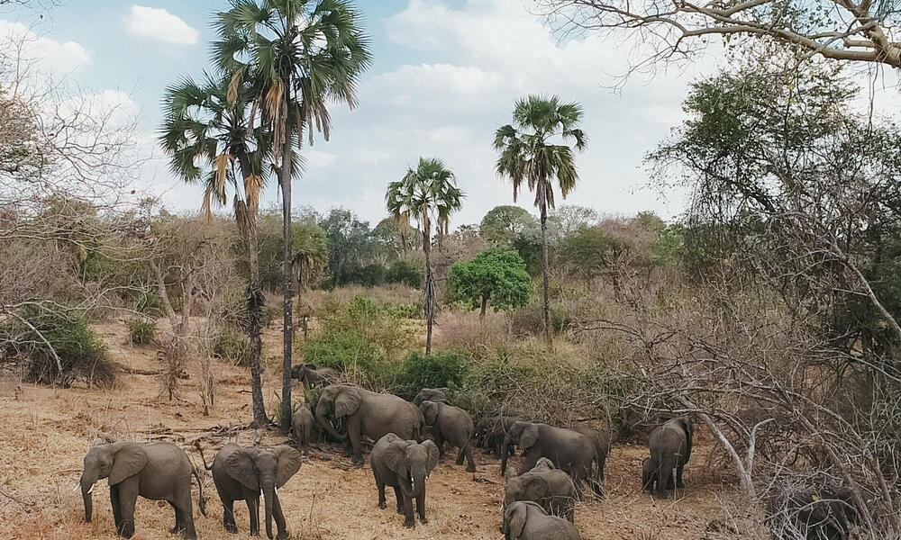 elephant in mozambique