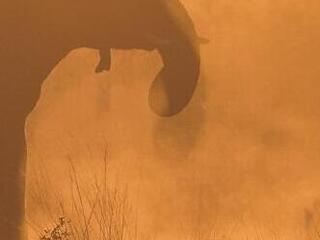"At dusk, hundreds of elephants move through the brush near the Kwando River's famous ""horseshoe"" bend  in eastern Namibia."