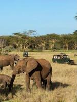 Elephant poaching costs African economies US $25 million per year in lost tourism revenue – study Brochure