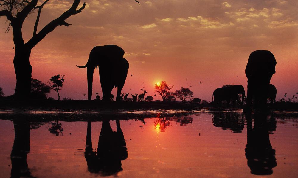 Elephant silhouettes at dusk
