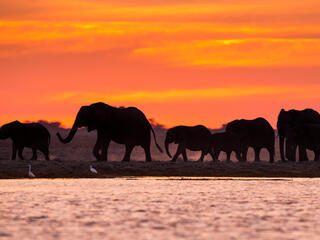 Elephants at sunset in Namibia
