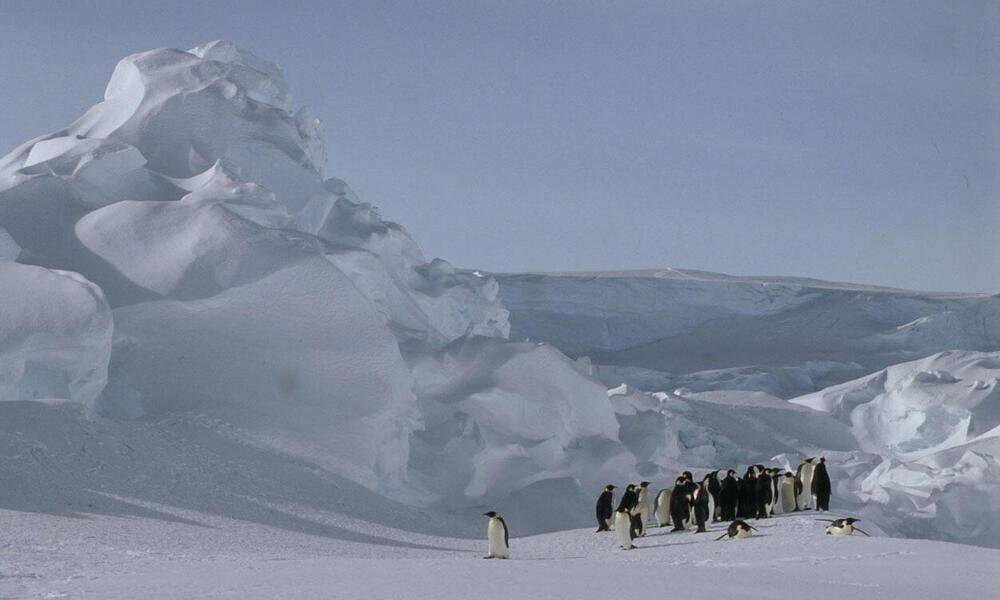 Emperor penguin at Dawson-Lambton Glacier, Antarctica