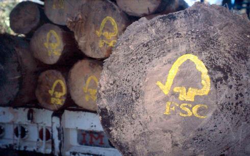 FSC logo painted on sustainable harvested logs. Uzachi forest, Oaxaca, Mexico