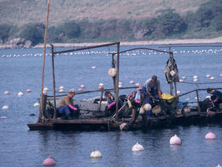 Farmed fishing