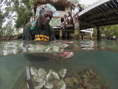 Erik Koti cleans his farmed giant clams
