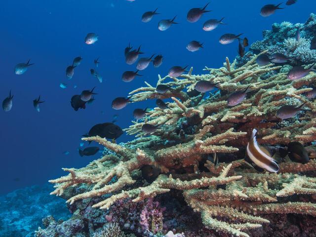 Fiji Great Sea Reef