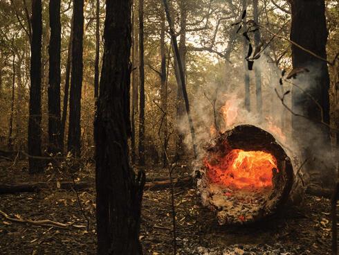 Fire inside hollow log in forest