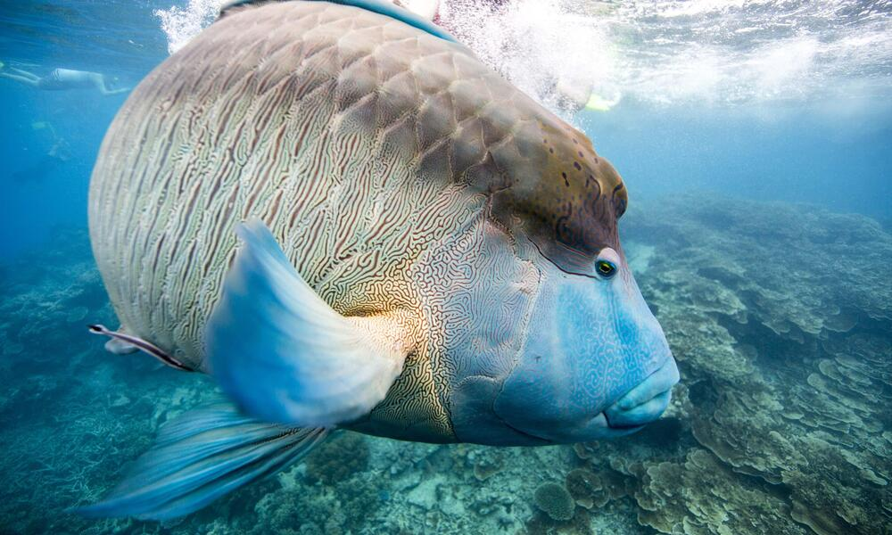 fish in reef