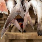 Close up of fish tails at Tema market, Ghana.