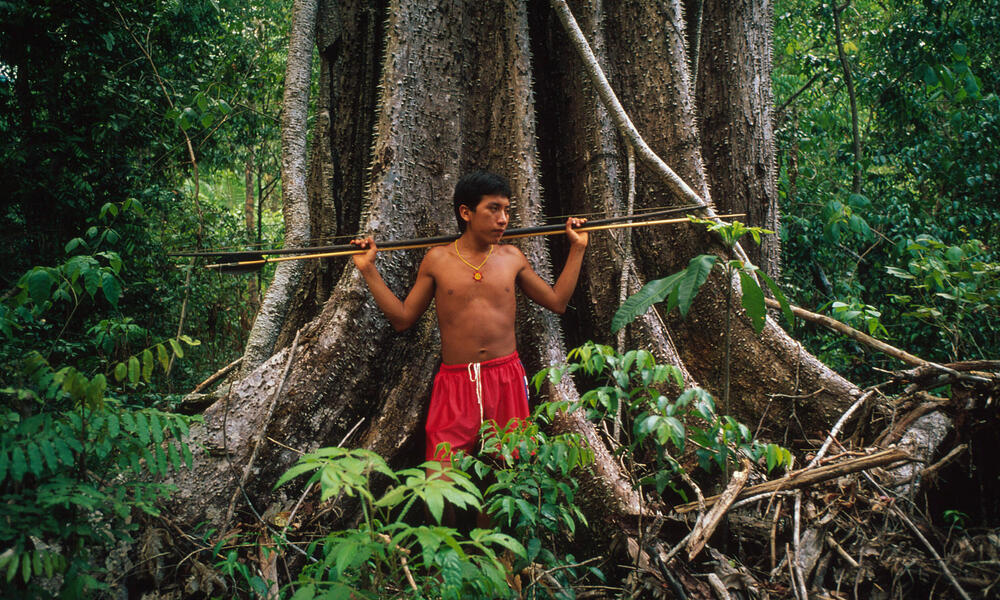 Yanomami hunter with bow and arrow by a tree in rainforest near to Demini Molaca