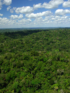 Forest Cover, Brazil