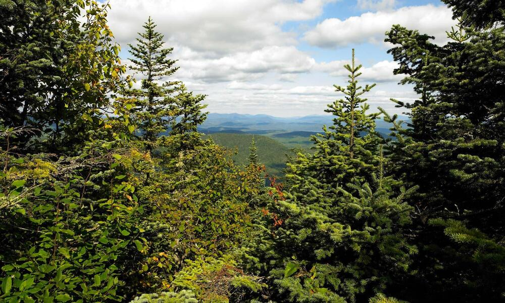 Sustainable forest Domtar company uses for its paper products
