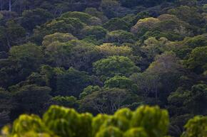 Forest, East province, Cameroon