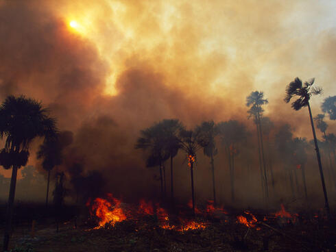 Forest Fire, Amazon