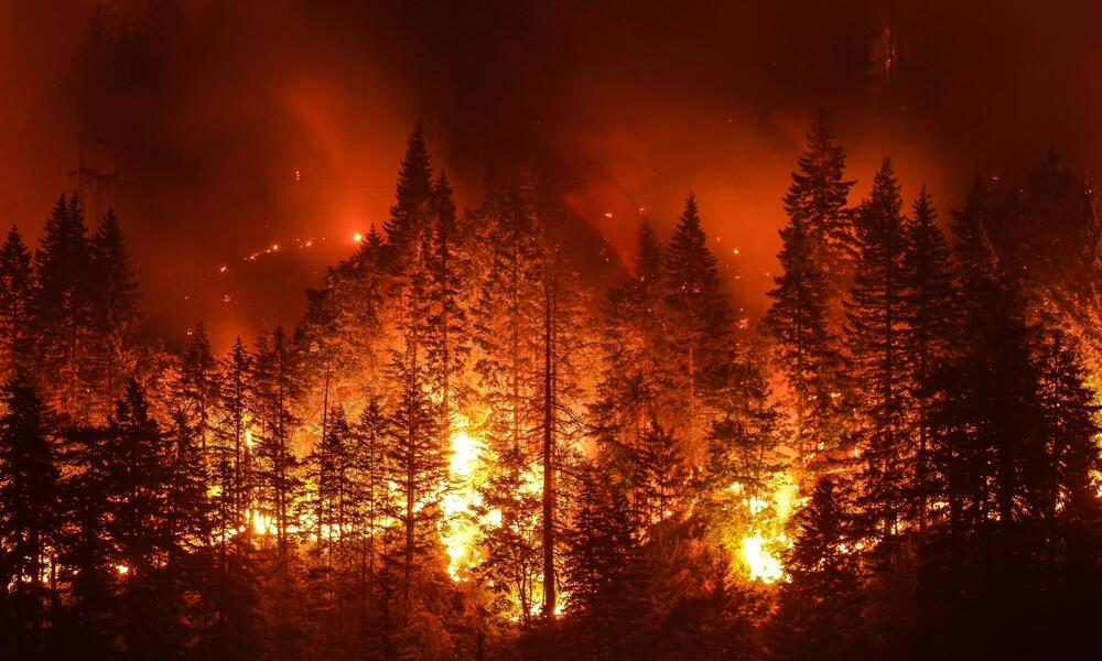 A forest on fire