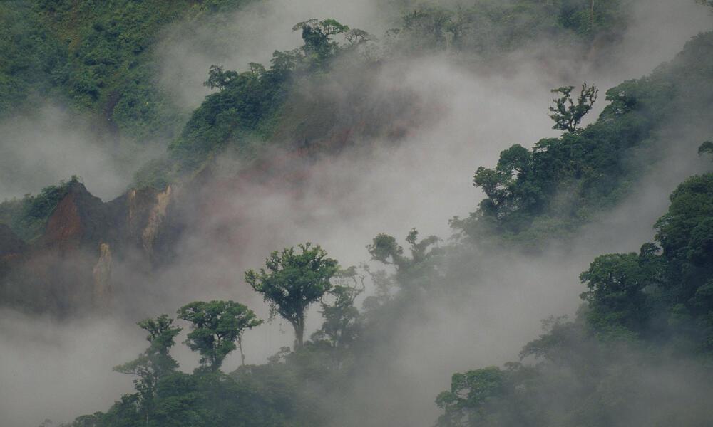 Forest in Ecuador