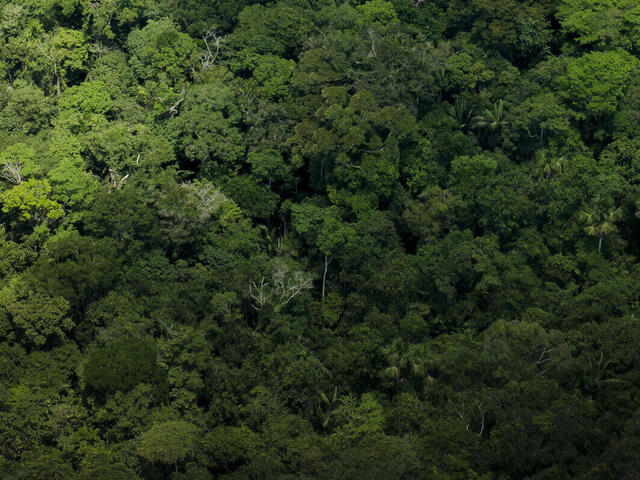 View of the tops of trees/forest in the Amazon