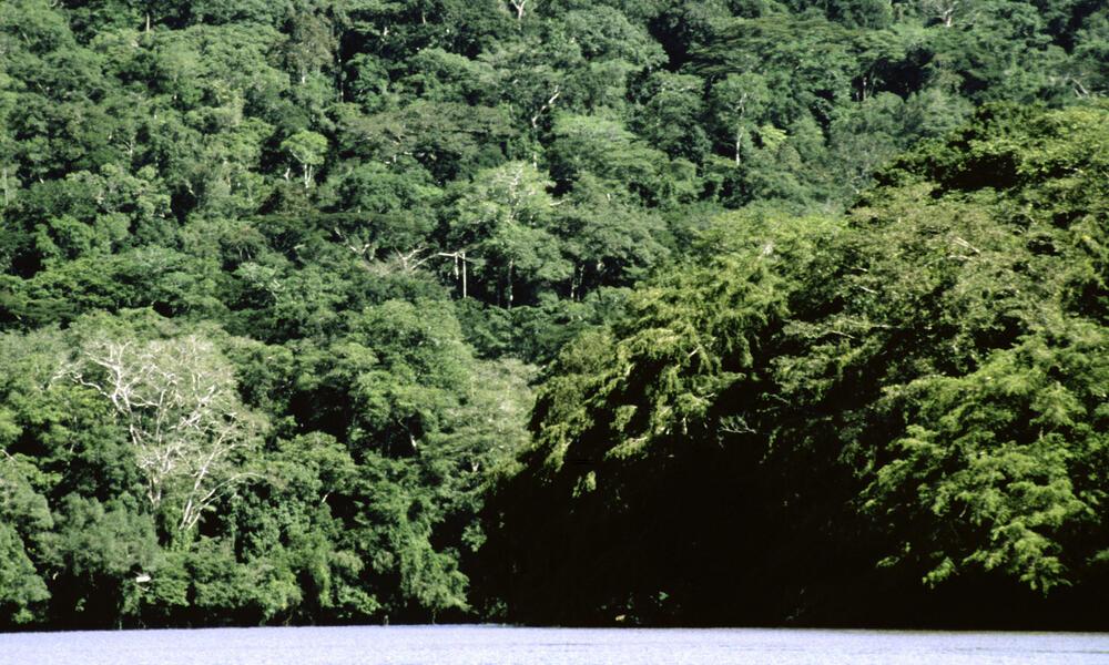 Northern Congo Basin, Congo