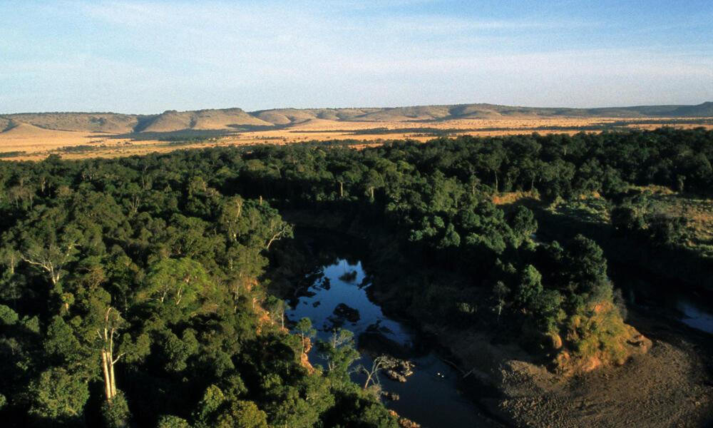 forest in kenya