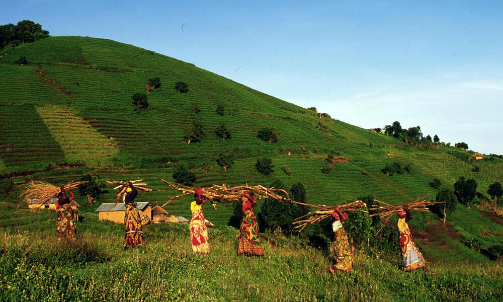 Fuelwood, Virunga State Park, Congo Basin