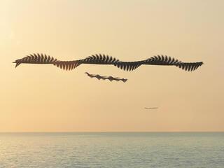 Birds in pattern of flight