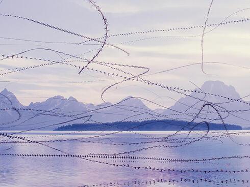 Birds in flight making pattern over water