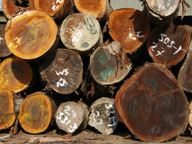 Global Forest and Trade Network GTFN