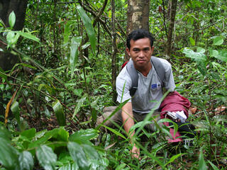 Greater Mekong Promoting Sustainable Forestry