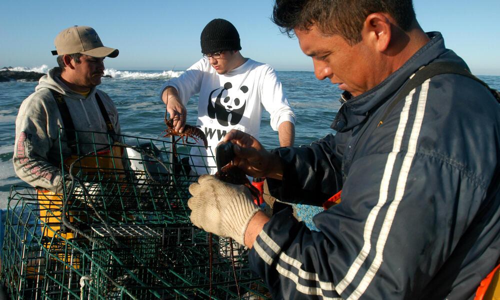 Gulf of California Lobster Fishermen