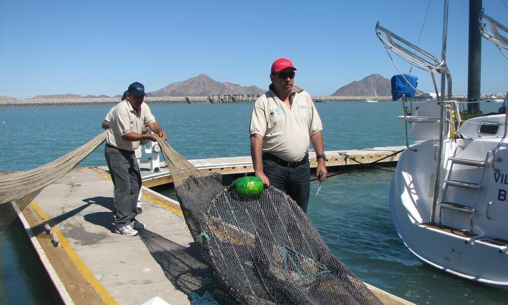 Gulf of California Reducing Bycatch