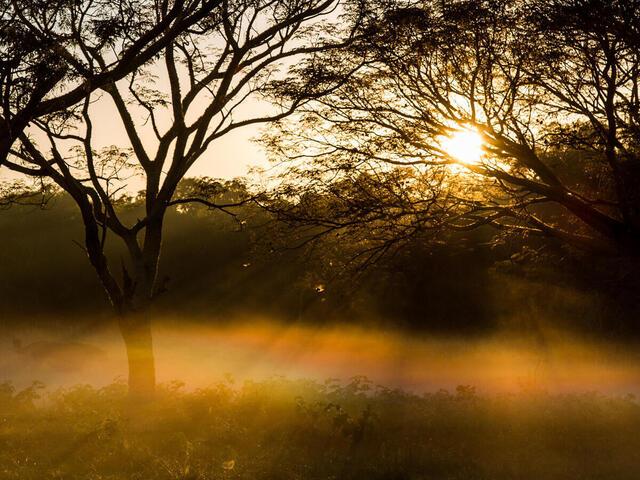 Chaco at sunrise