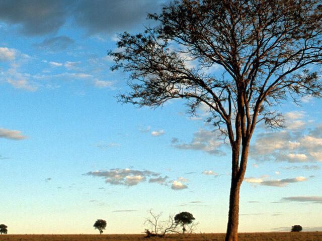 Dusk over the Cerrado
