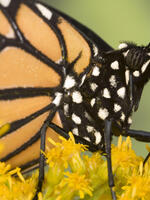Forest Surface Occupied by Monarch Butterfly Hibernation Colonies in December 2013 Brochure