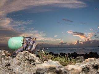 Hermit Crab with plastic bottle shell