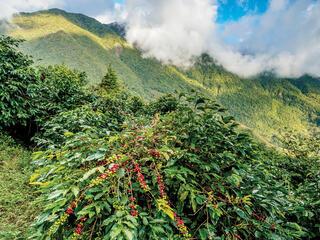 Wild growth along a mountainside