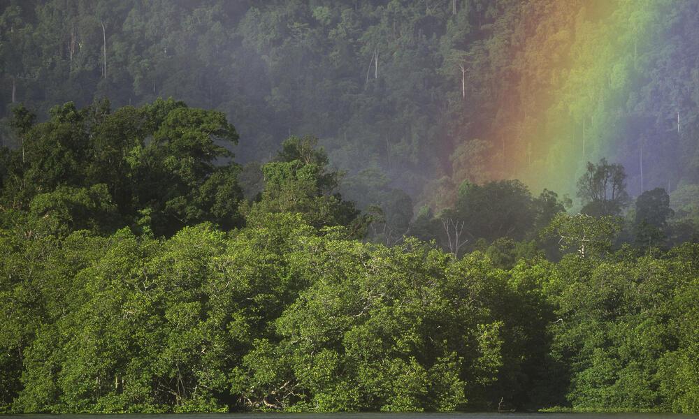 Indonesian tropical rainforest