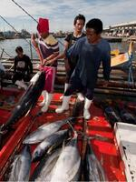 Innovative Incentive-Based Tools in Reform of Highly Migratory Fisheries at Project Development and Regional Scales Brochure
