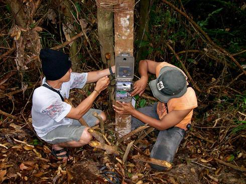 Installing camera trap in Tesso Nilo national park, Riau Province, Indonesia