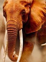 Integrating Technologies to Combat Poaching Brochure