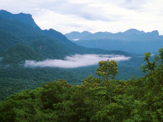 aerial view of forest with mountains in the background
