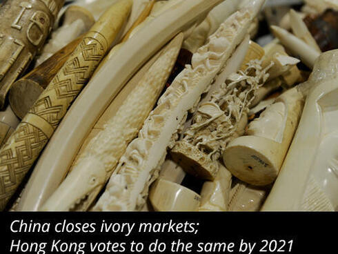 Ivory update