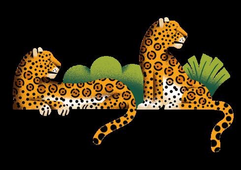 Illustration of 2 jaguars resting