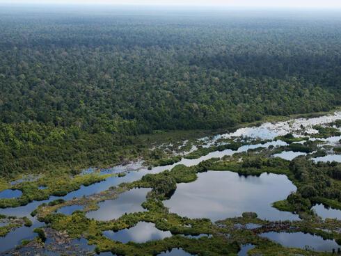 Aerial view of Kampar peat swamp.