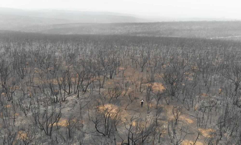 Aerial view of one person walking through a burnt forest