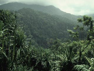 Overlooking the forests of Kerinci Seblat National Park in Sumatra, Indonesia
